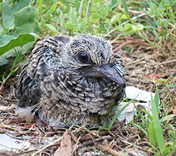 Photo of baby bird.